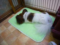 itakura445_20091004155741.jpg