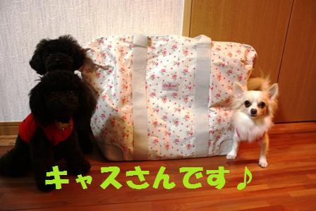 IMG_1335.jpg