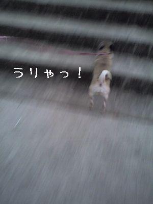 06-01-15_17-08.jpg