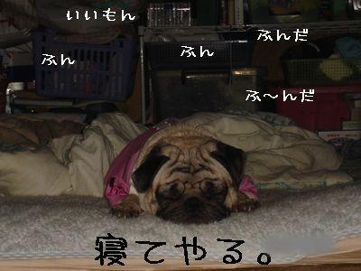20060115003206.jpg
