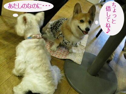 2008_0809(041).jpg