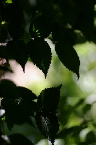 葉をキャンパスに 光が描く