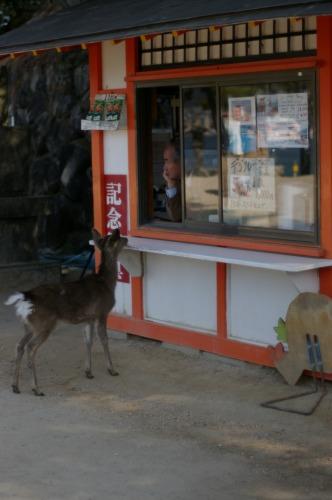 鹿がいっぱい ひとなつっこいです