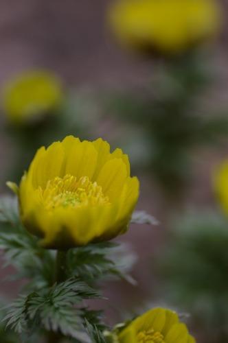 花びらのやわらかさが 伝わりますように