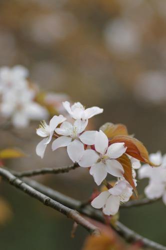 咲いてるところを 見つけてパチリ