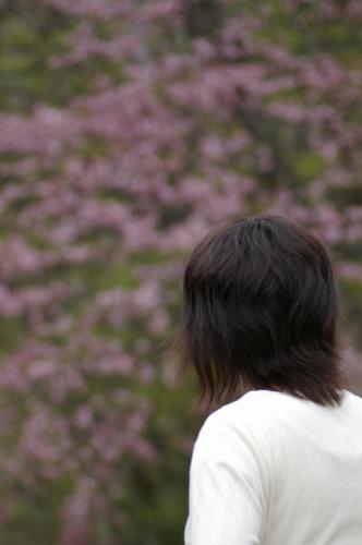 一番色濃い 大山桜です