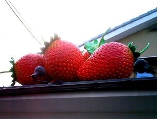 与楽の苺色