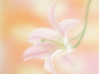 MarikamoColor.jpg