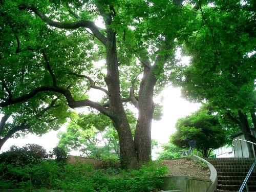 子供の頃に遊んだ公園の木