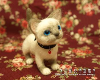 cat07.jpg