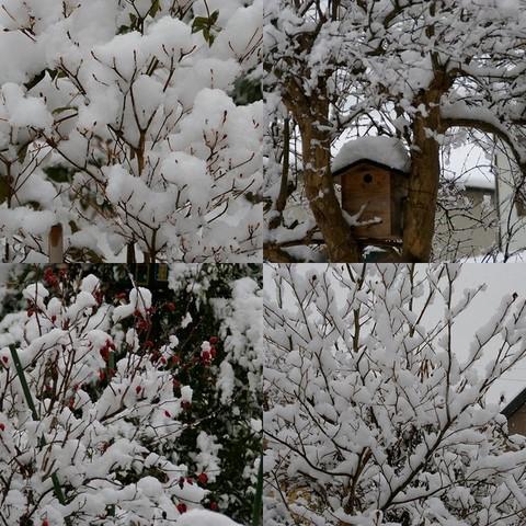 1217枯れ木に雪2