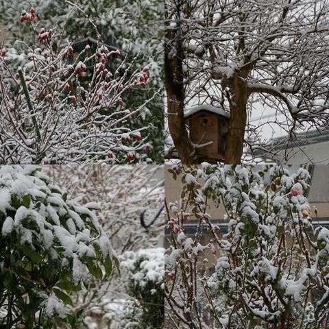 1217枯れ木に雪