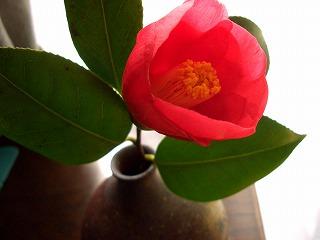 初咲きつばき