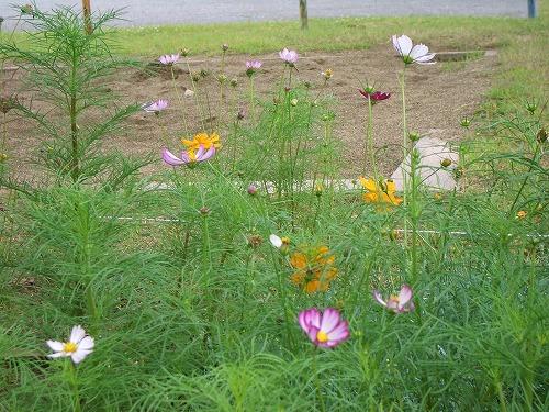 近隣公園の花壇