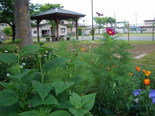近隣公園の花壇2