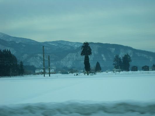 面白い形の木