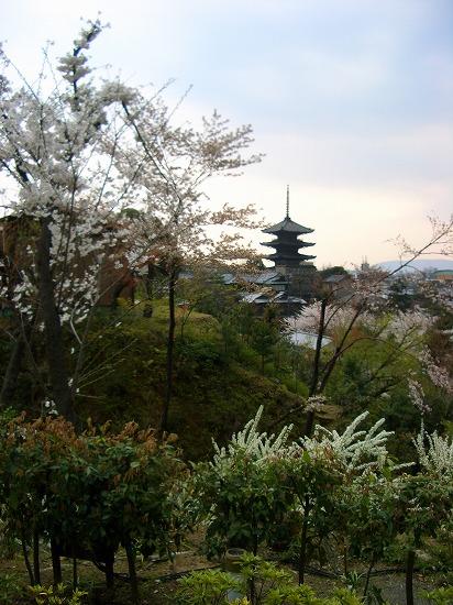 高台寺より八坂の塔