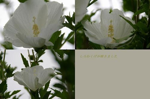 IMGP1161.jpg