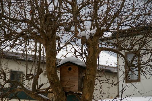巣箱の屋根にはまだ雪