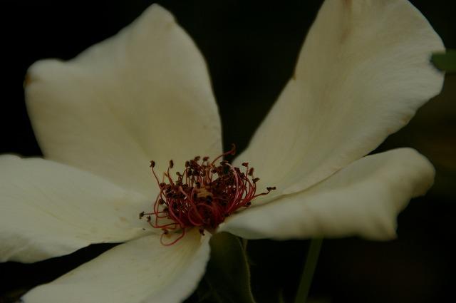 ホワイトウイングス1