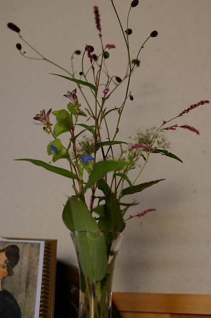 小さな庭の花