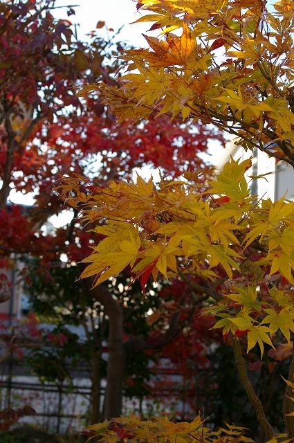 紅葉さまざま