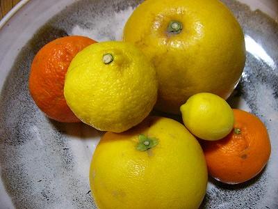 柑橘類各種