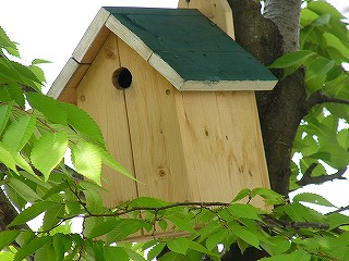 H子さん家の巣箱