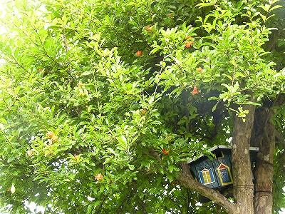 巣箱とざくろの木