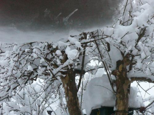 巣箱のあるざくろの木