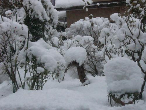 今朝の大雪