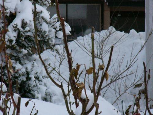 庭に積まれた雪