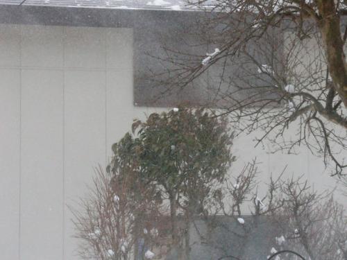 今朝の吹雪