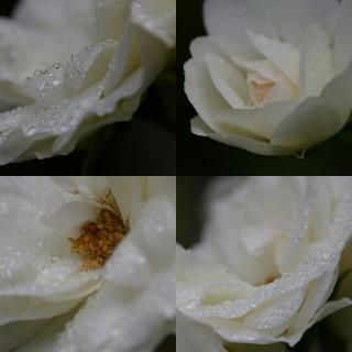 collage21.jpg
