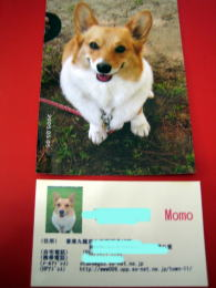 momo1097.jpg