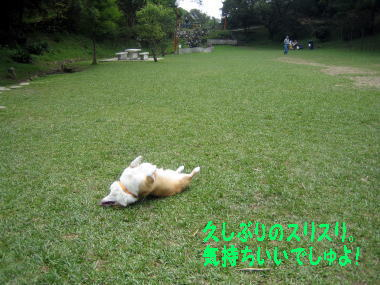 momo2494.jpg