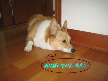 momo4121.jpg