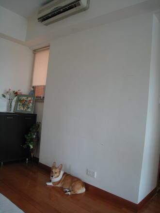 momo5446.jpg