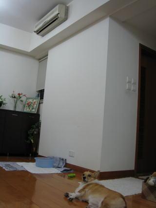 momo5447.jpg