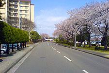 2006033101.jpg