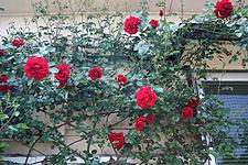 2007051513.jpg