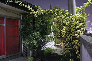 2008043003.jpg