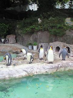 ペンギン先輩