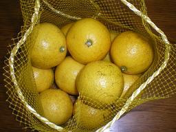 ニューサマオレンジ