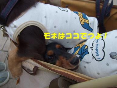 071007rokkousan07.jpg