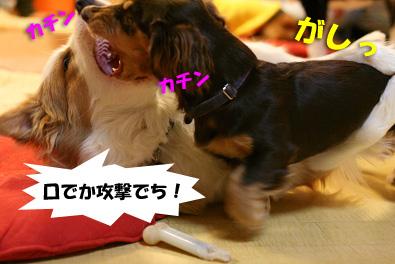 2007 10 27 わんママ家 057blogのコピー