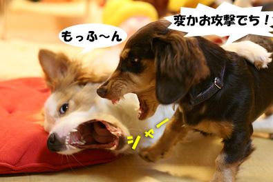 2007 10 27 わんママ家 058blogのコピー