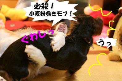 2007 10 27 わんママ家 062blogのコピー