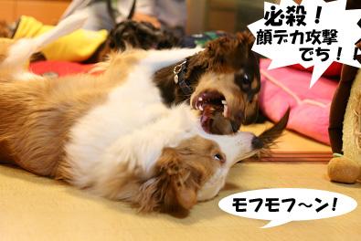 2007 10 27 わんママ家 066blogのコピー