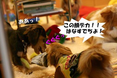 2007 10 27 わんママ家 104blogのコピー